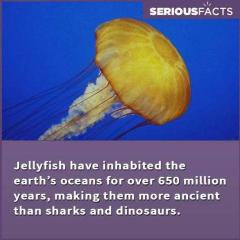 INTERESTING FACTS 04