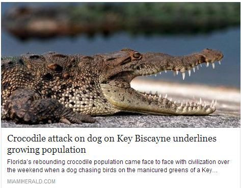 Florida's rebounding crocodile population came face to face with civilization over the weekend when a dog chasing birds on the manicured greens of a Key Biscayne golf course was mauled and killed by one of the reclusive reptiles.